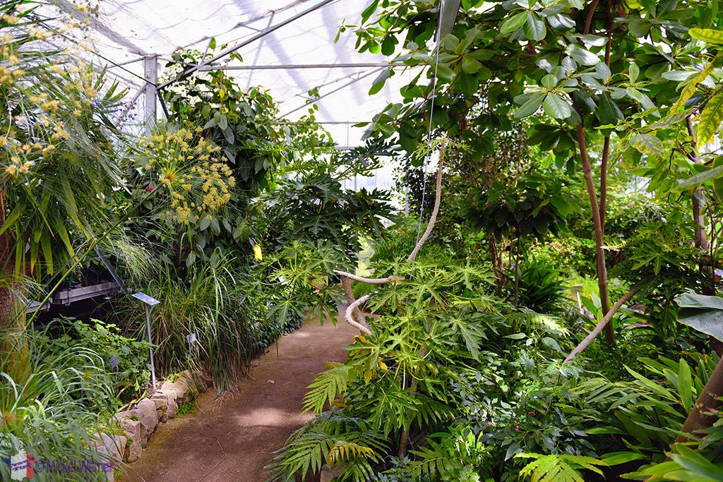 Amazon rainforest of jardins suspendu of le havre for Jardin suspendu